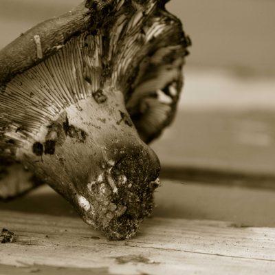 Mushroom Photo Print