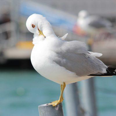 Seagull Photo Print
