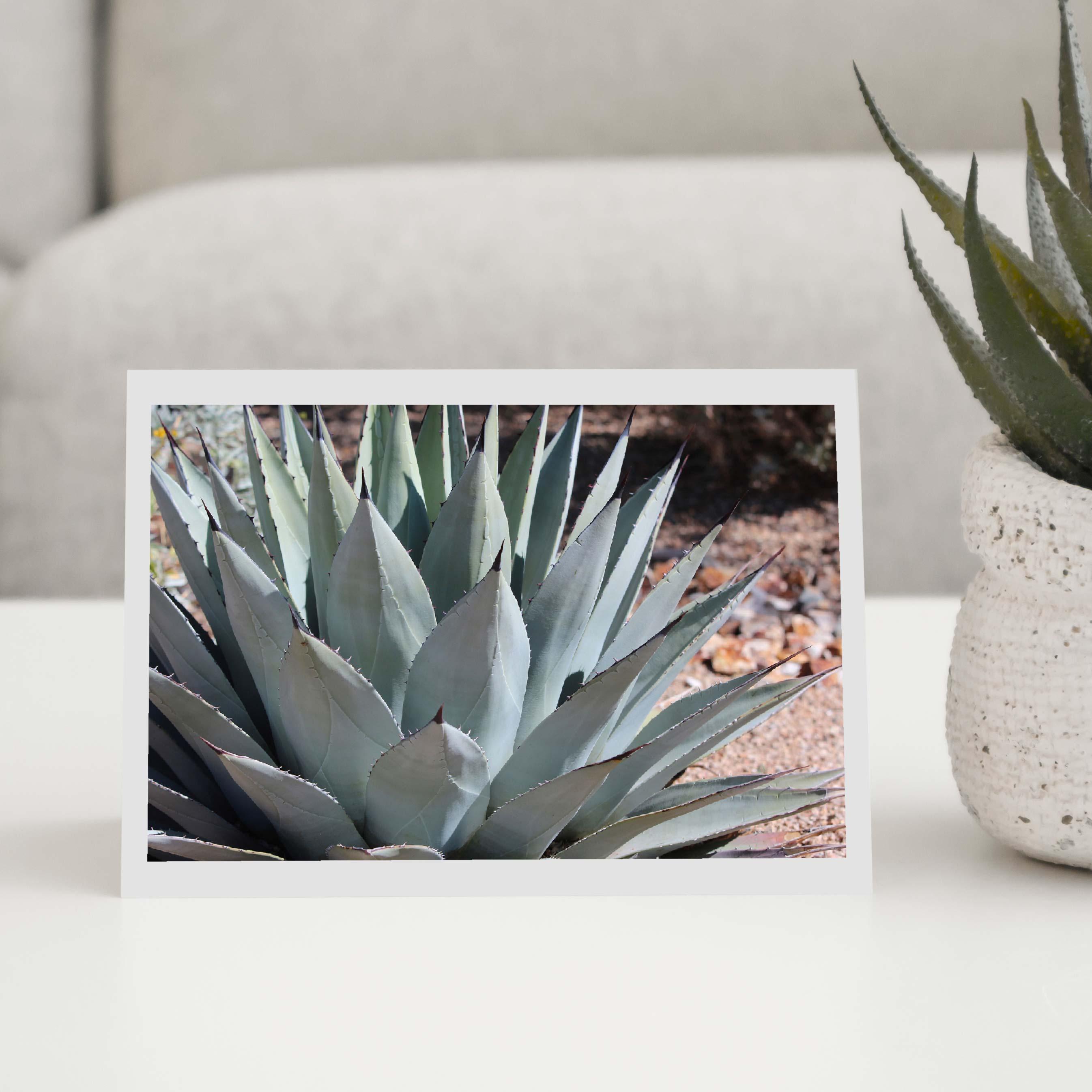 Cactus Greeting Cards
