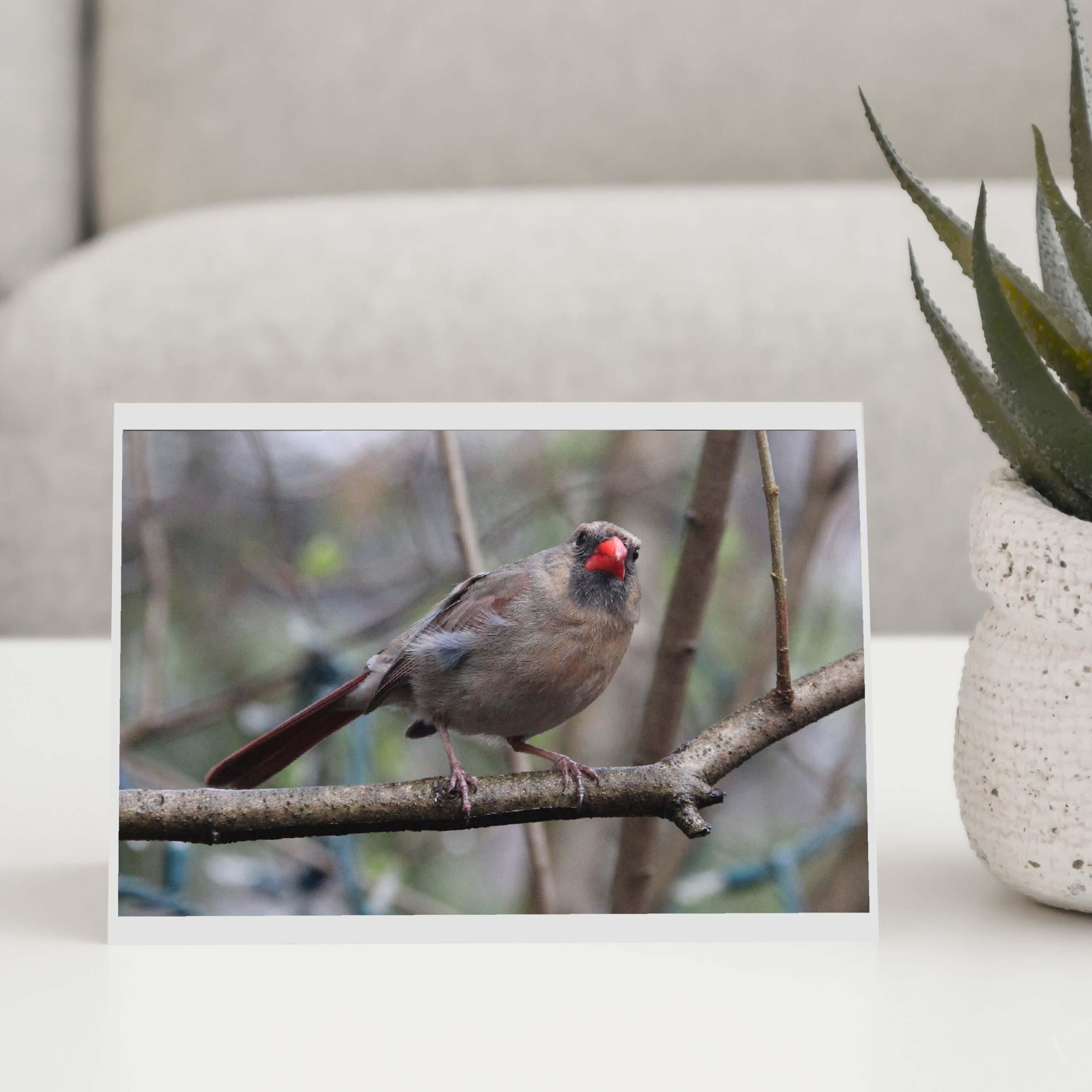 Red Beak Bird Greeting Card