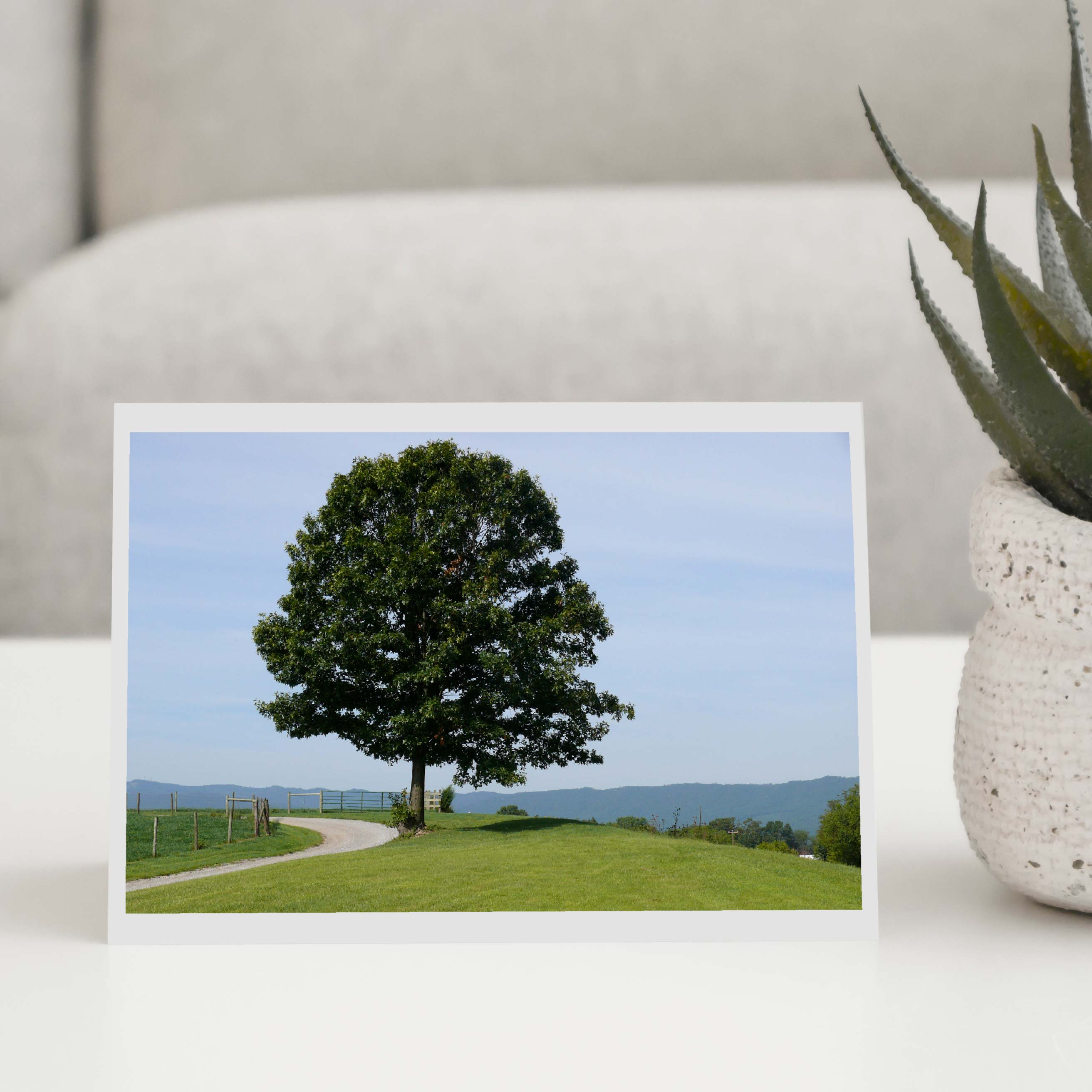Tree on the Path Greeting Card